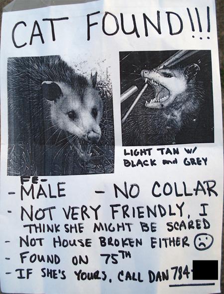 cat found flyer possum