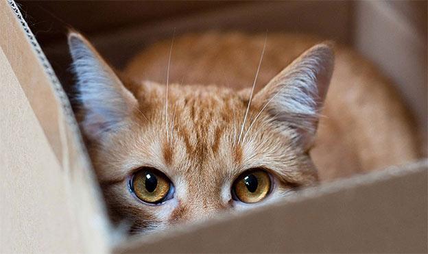 cat likes box