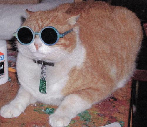 cat sunglasses laser pointer