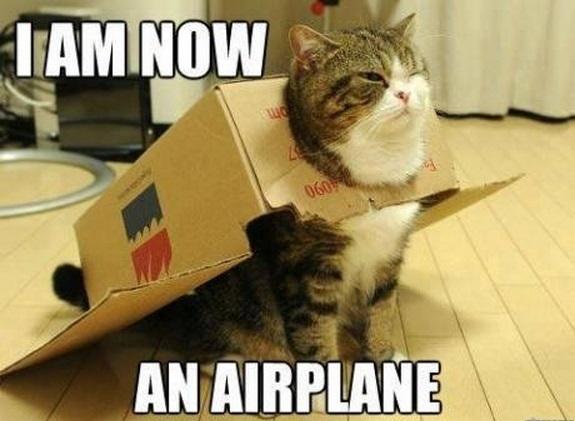 lolcat airplane