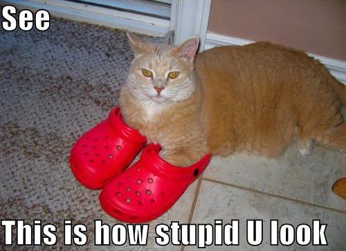 lolcat cat wearing shoes