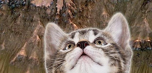 mars kitty