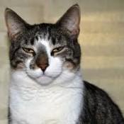 nf cat name frostee rucker