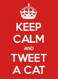 keep calm tweet cat belgium